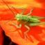 W owadzim świecie